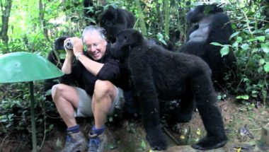 Man With His Wild Cousin The Mountain Gorilla