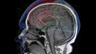 Brain Circuit Shows How Dopamine Controls Animal Behavior