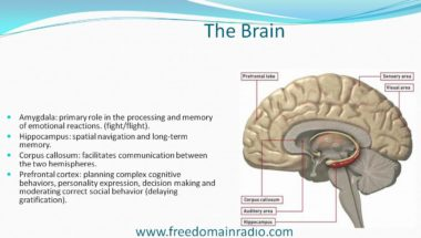 Stefan Molyneux: The Bomb in the Brain Part 3 - The Biology of Violence: The Effects of Child Abuse