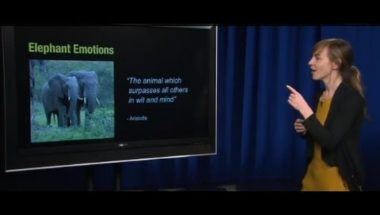 Human Emotion 3.3: Dogs, Rats, Elephants and Emotion?