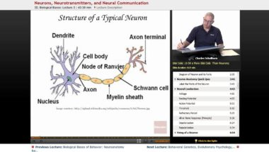AP Psychology: Neurons, Neurotransmitters, and Neural Communication