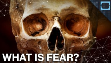 How Fear Is Wired In Our Brains
