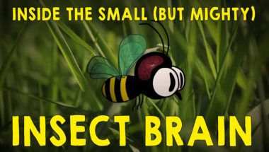 Why the insect brain is so incredible