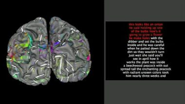 Neuroimaging reveals detailed semantic maps across human cerebral cortex