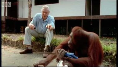 David Attenborough: Amazing DIY Orangutans