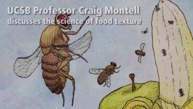 The Basis of Food Texture Sensation
