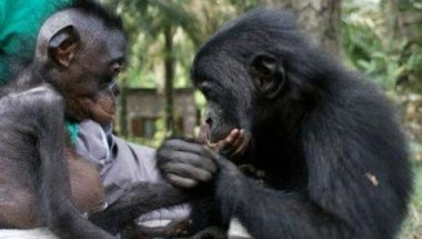 What Bonobos Can Teach Us