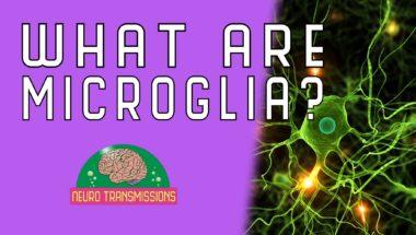 What Are Microglia?
