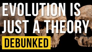 Evolution is Just a Theory Debunked