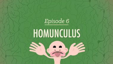 Crash Course Psychology #6: Homunculus