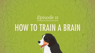 Crash Course Psychology #11: How to Train a Brain
