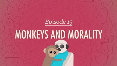 Crash Course Psychology #19: Monkeys and Morality