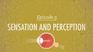 Crash Course Psychology #5: Sensation & Perception
