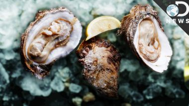 There's Only One Aphrodisiac According To Science