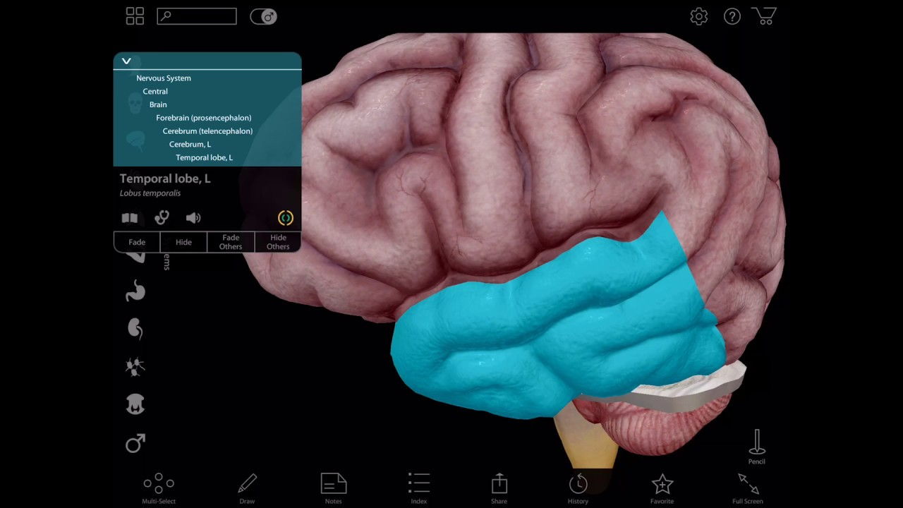 Virtual 3D Brain Dissection with Human Anatomy Atlas - The Mind Voyager