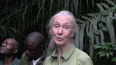 Wounda's Journey: Jane Goodall releases chimpanzee into forest