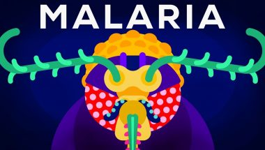 How To Eradicate One Of Our Deadliest Enemies – Gene Drive & Malaria