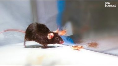 Mice made to kill using mind control lasers