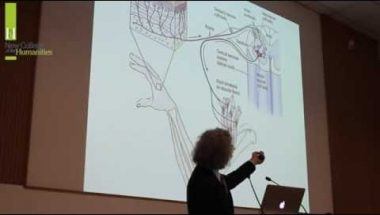 Steven Pinker: The Human Brain