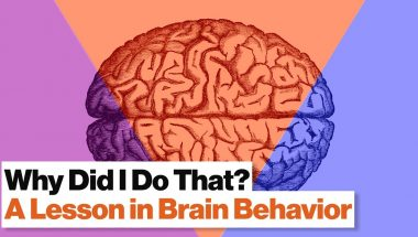Robert Sapolsky: 3 Brain Systems That Control Your Behavior: Reptilian, Limbic, Neo Cortex