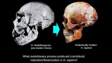 Robert Franciscus: Domestication and Human Evolution - Craniofacial Feminization in Evolution