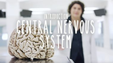 Introduction to the Central Nervous System