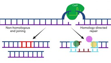 Making CRISPR Cas9 work in the brain