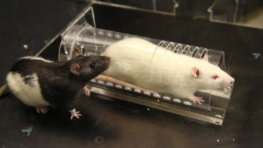 Peggy Mason: Anti-anxiety medication limits empathetic behavior in rats