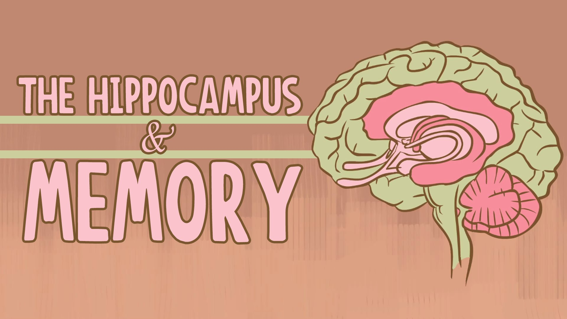 What happens when you remove the hippocampus? - The Mind ...