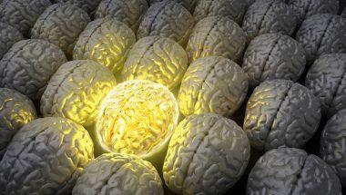 "Susan Polgar: ""My Brilliant Brain"""