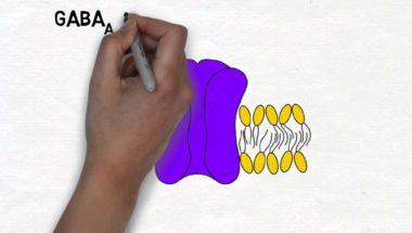 2-Minute Neuroscience: GABA