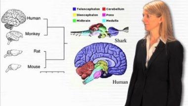 Cori Bargmann: Overview of Genes and Behavior
