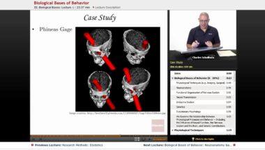 AP Psychology: Biological Bases of Behavior