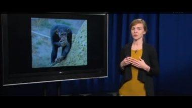 Human Emotion 3.2: Monkeys and Emotion
