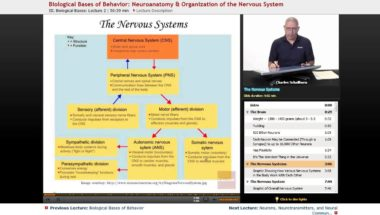 AP Psychology: Neuroanatomy & Organization of the Nervous System
