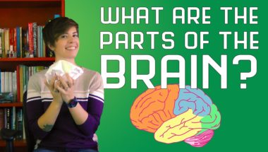 What are the Parts of the Brain?