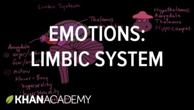 Emotions: Limbic System