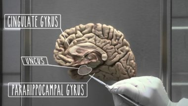 Hypothalamus and Limbic System