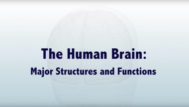 The Human Brain: Major Structures and Functions