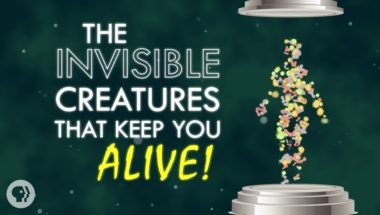 The Invisible Creatures That Keep You Alive!