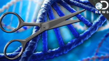 What is CRISPR & How Could It Edit Your DNA?