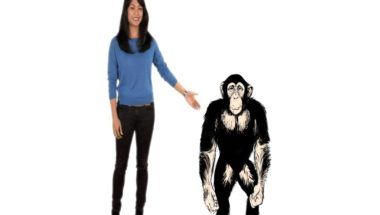 Why Are Chimps Stronger Than Humans?