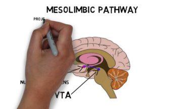 2-Minute Neuroscience: Ventral Tegmental Area (VTA)
