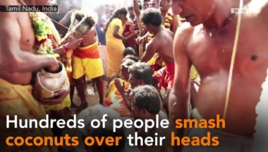 People smash coconuts over their heads in search of 'luck'