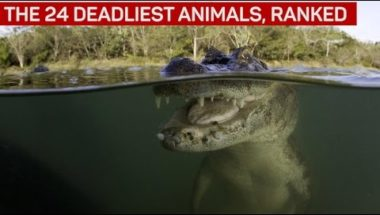 The 24 deadliest animals, ranked
