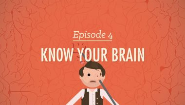 Crash Course Psychology #4: Meet Your Master - Getting to Know Your Brain