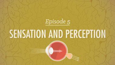 Crash Course Psychology #5: Sensation & Perception