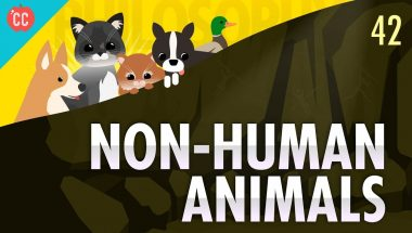Crash Course Philosophy #42: Non-Human Animals