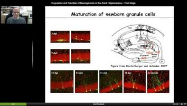 Fred Gage: Regulation and Function of Neurogenesis in the Hippocampus