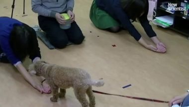 Dogs judge humans by how we treat others
